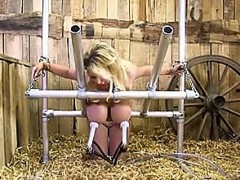 milking blondes - visit..